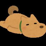 桃taroの犬